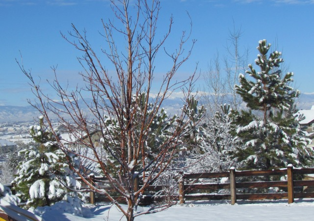 Colorado Spring Snow 4