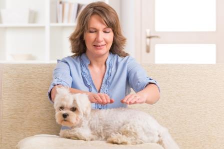 Dog Receiving Reiki